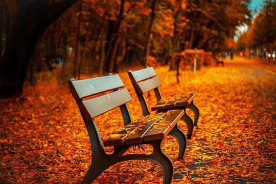 Ahora sí, el otoño está aquí