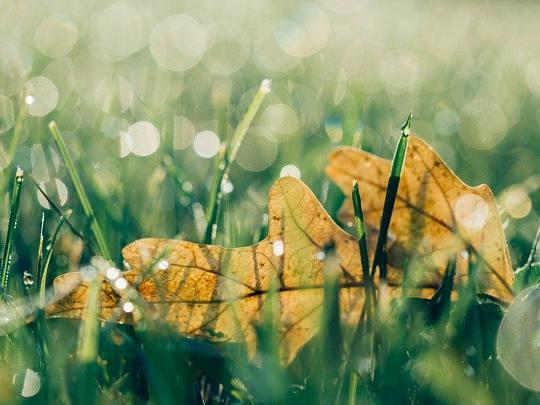 Brotes verdes5 (5)